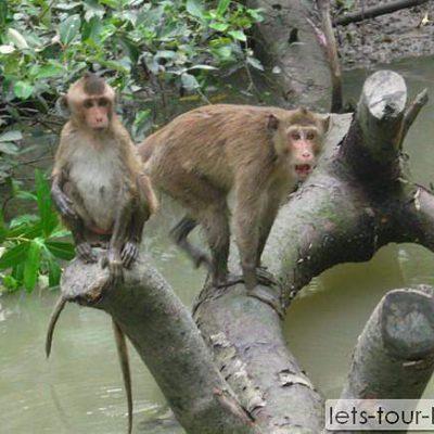 Monkey Island SEE Khlong kon