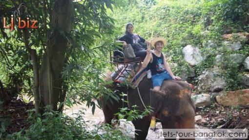 khoa yai elephants tigers gibbons leopards Malaysian