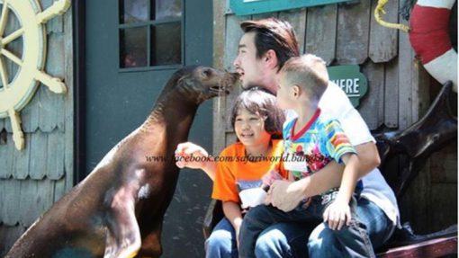 safari world sea lion