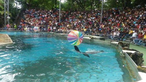 safari world sea lion water show