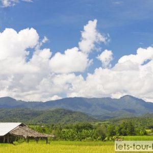 Chiang rai rice field mountain