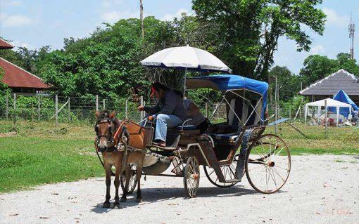 weingkumkam by horse