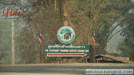 chiang daw elephant camp