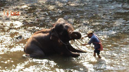 maetaman elephant baht