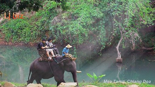 maetaman elephant ride