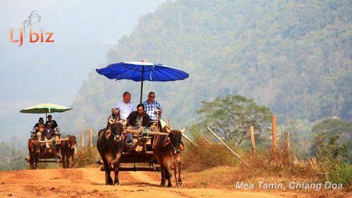 maetaman ox bcart ride