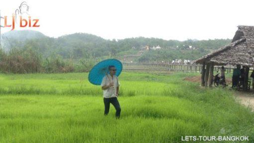 maehongson rice field