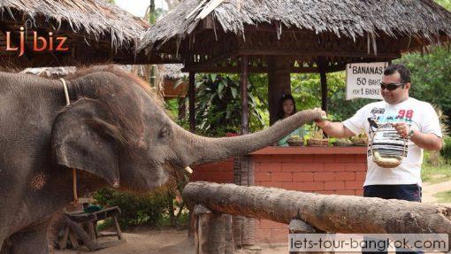 Krabi Phang nga Elephant park