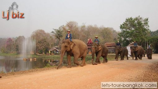 Lampang Elephant conservation center