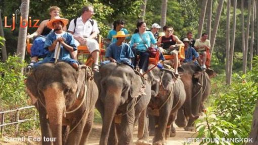 Samui safari elephant ride