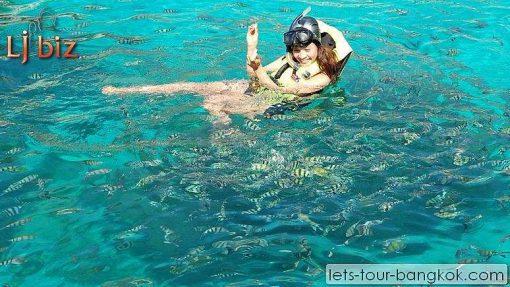 koh tao Nanyuan snorkle
