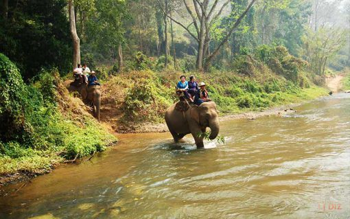 elephant riding in Chiang dao