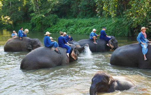 Elephant bathing on the river