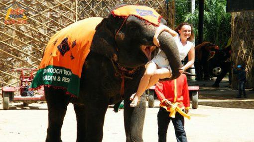 Noung Nooch garden elephant show