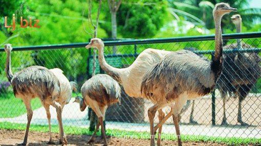 Pattaya million year park