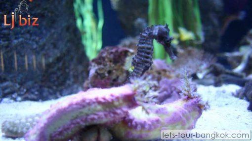 Pattaya under water world