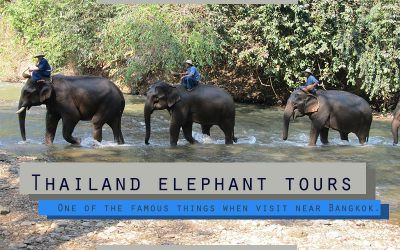 Thailand elephant tours , One of the famous things when visit near Bangkok.