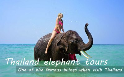 Thailand elephant ride experience & Tourist industrial