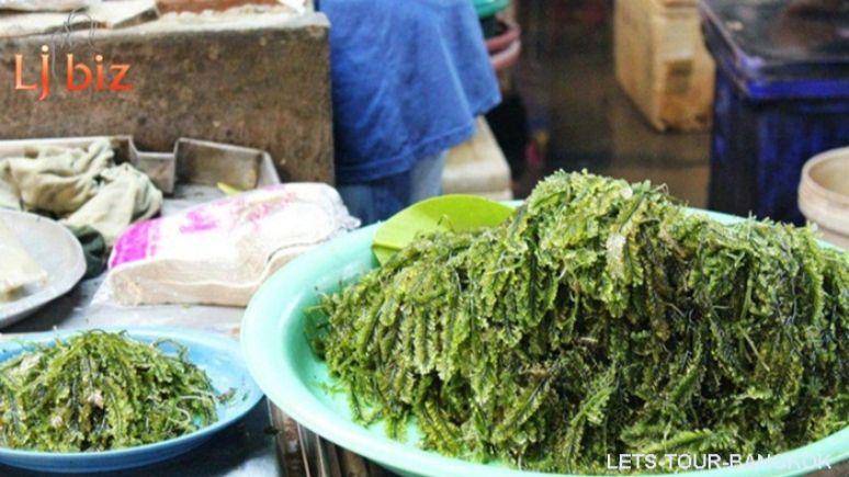 KBV Koh Klang seaweed