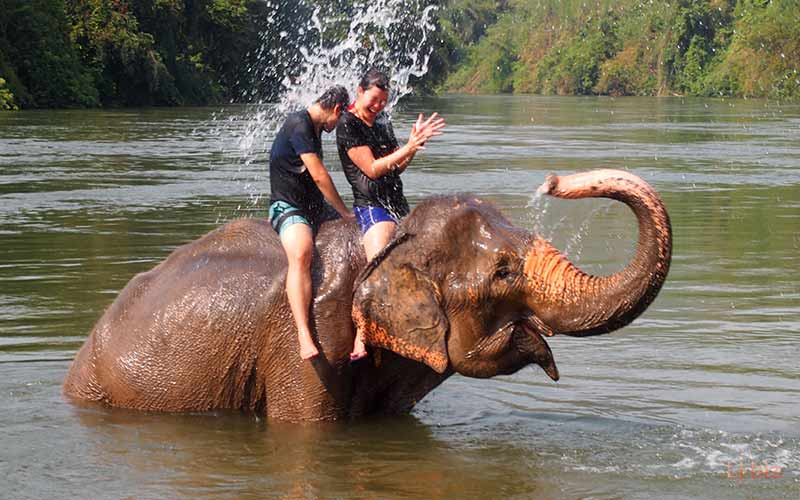 Elephant bathing program