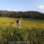 Room at Muang kong rice field