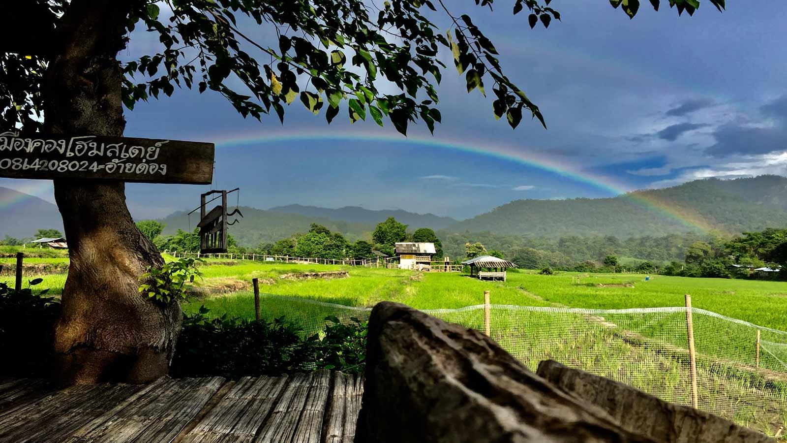 Chiang mai Muangkong rice field