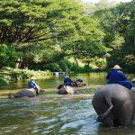elephant bathing lampang elephant conservation center