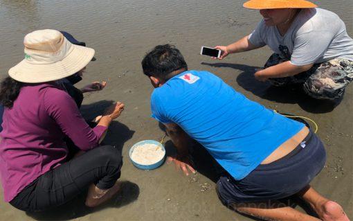 finding razor clam