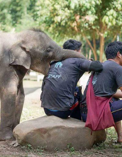 Pattara elephant farm